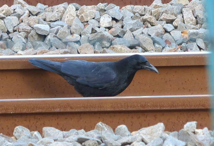20130202-1 hasibosogarasu-20121231-P1000741