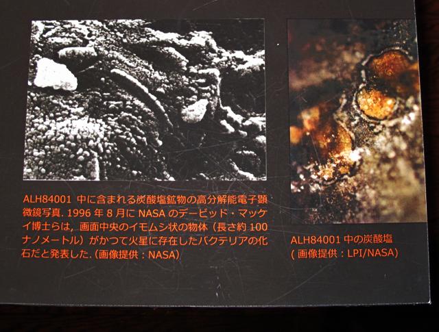 これが今回の展示で私が一番見たかった知る人は知る、あの伝説の隕石「ALH84001」の破片