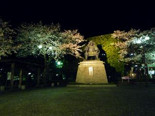 桜と信玄公引き