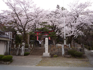 福地八幡神社の桜