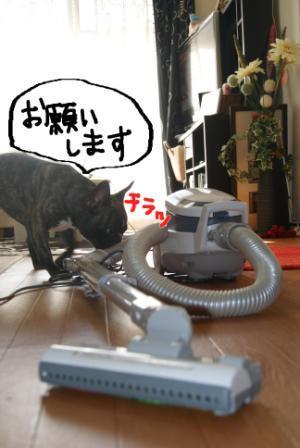 2_20101119124932.jpg