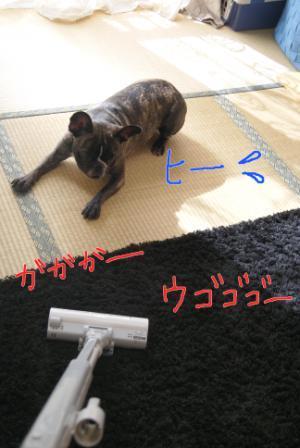 5_20101119124932.jpg