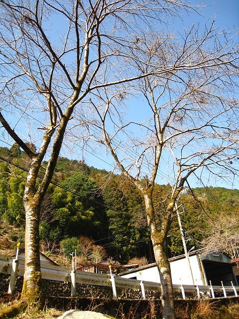 2013.3.17 養沢JPG (5)
