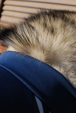 襟元のモフ毛が萌え