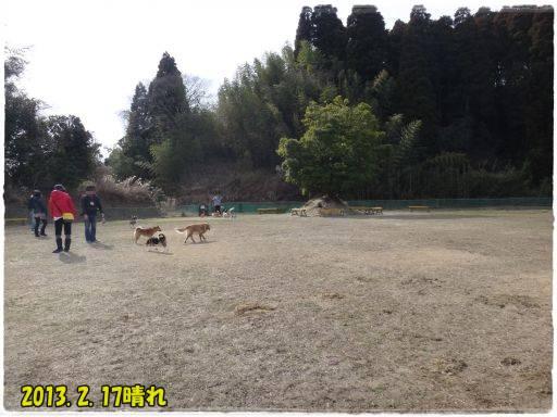 20130219-1.jpg