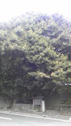 Image954.jpg