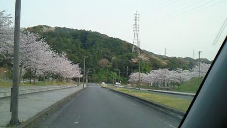 2011.4桜4