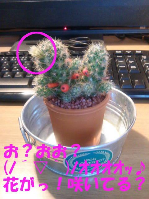 花がっ!咲いてる?