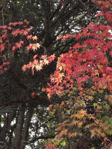 2010年11月神社仏閣巡りの旅 11-2010 022