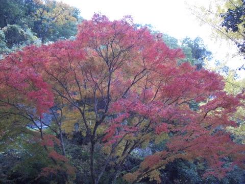 2010年11月神社仏閣巡りの旅 11-2010 034