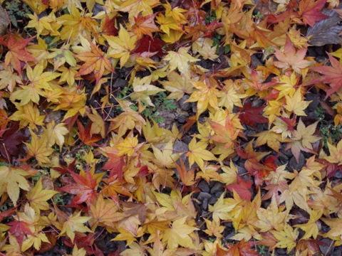 2010年11月神社仏閣巡りの旅 11-2010 066