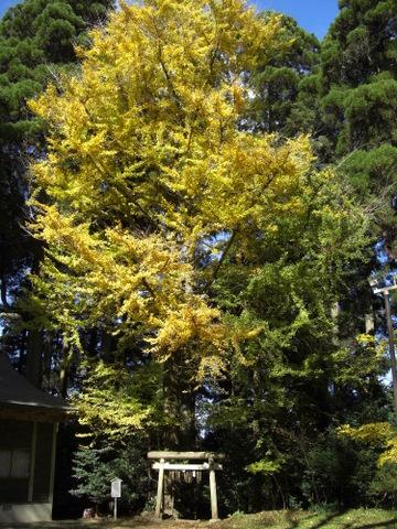 2010年11月神社仏閣巡りの旅 11-2010 123