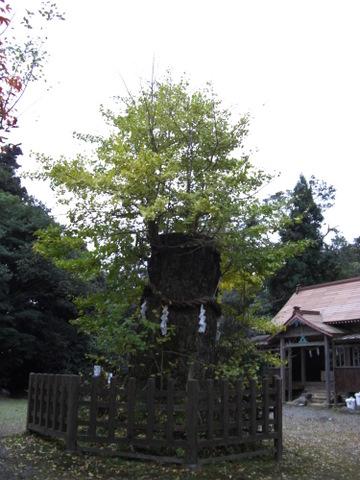2010年11月神社仏閣巡りの旅 11-2010 052