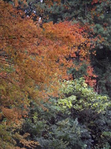 2010年11月神社仏閣巡りの旅 11-2010 072