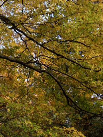 2010年11月神社仏閣巡りの旅 11-2010 211