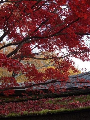 2010年11月神社仏閣巡りの旅 11-2010 213