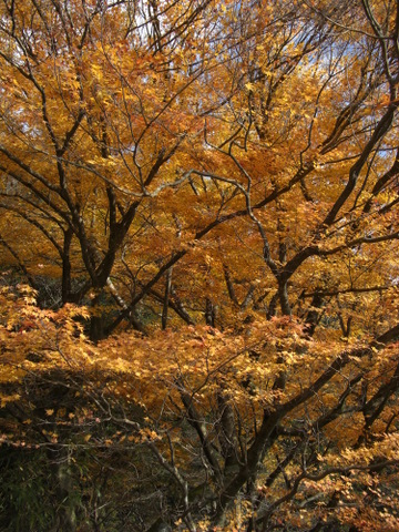 2010年11月神社仏閣巡りの旅 11-2010 218