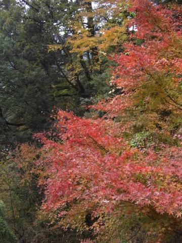 2010年11月神社仏閣巡りの旅 11-2010 233