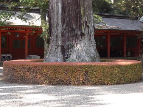 2010年11月神社仏閣巡りの旅 11-2010 276