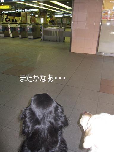 002_515.jpg