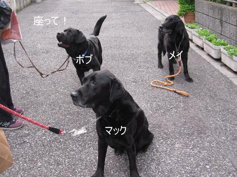 002_528.jpg