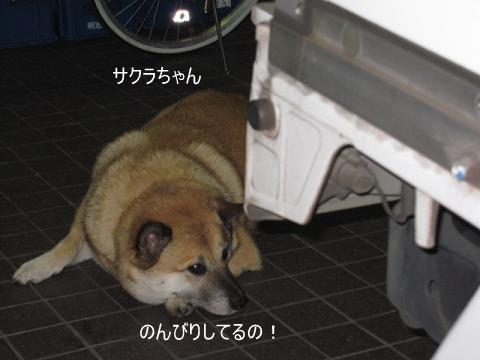 002_621.jpg