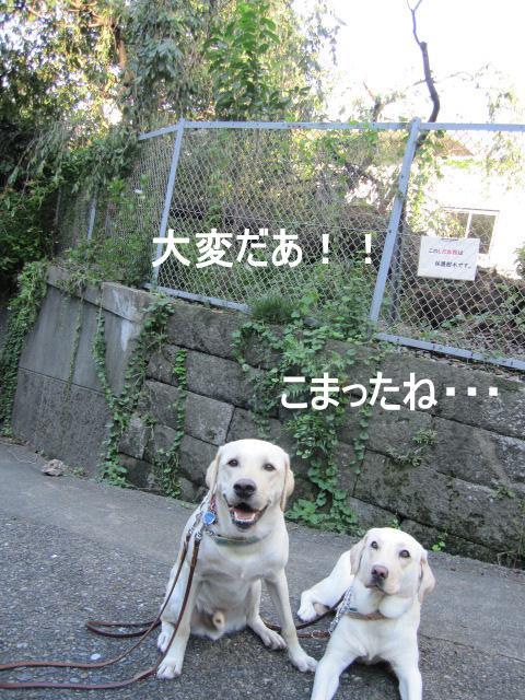 005_0924c.jpg