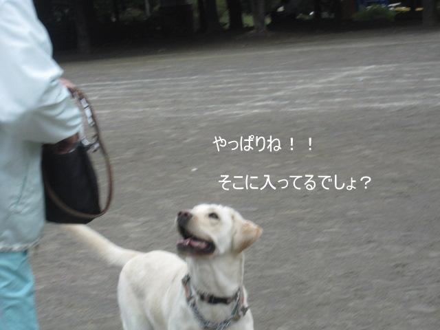 006_0927c.jpg