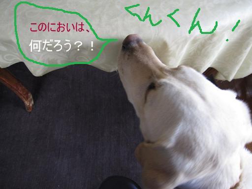 010_pp.jpg