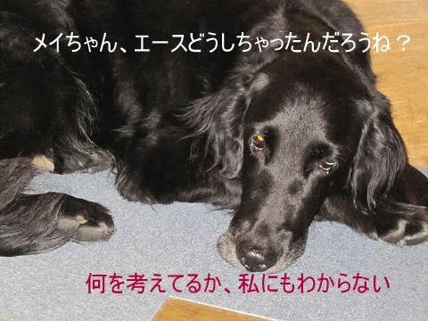 015_f.jpg