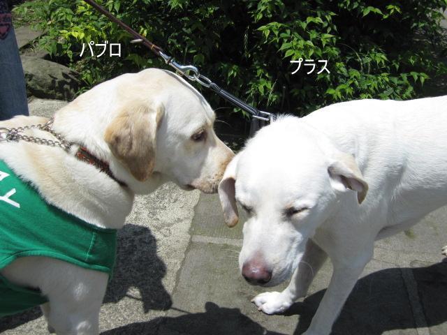 041_0604a.jpg