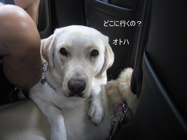 054_0820c.jpg
