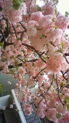 大阪造幣局3