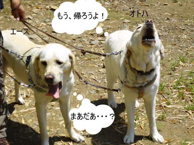 DSC00367_0509a.jpg