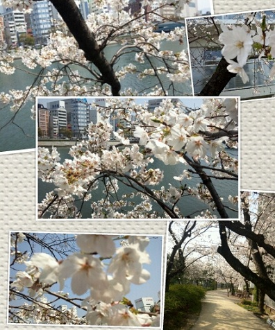PhotoGrid_1333969848350.jpg