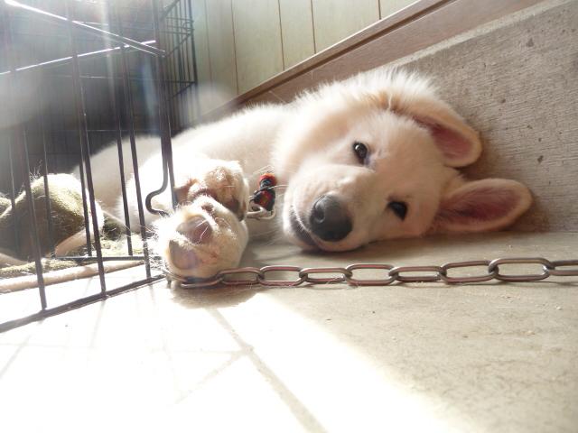 疲れたら・・・寝るのよ~★モリーちゃん★