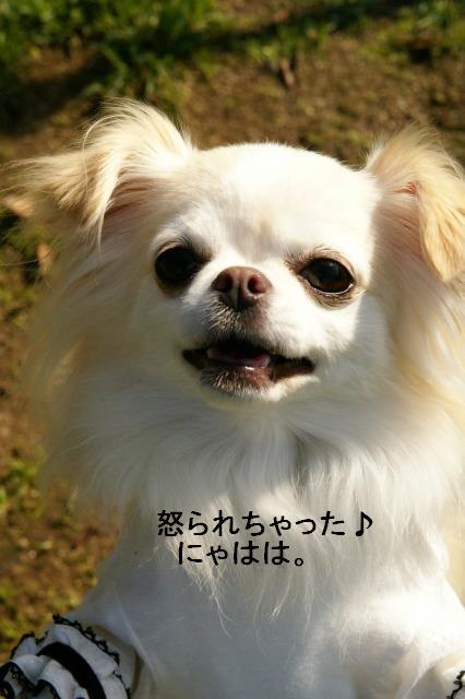 200911篠山 (7)