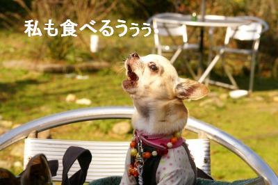 200911篠山 (41)