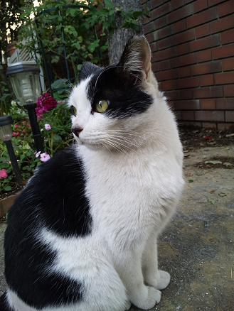 policer cat 4