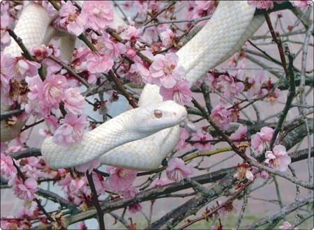 1月1日 白蛇