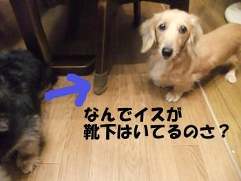 写真689(№211用)1