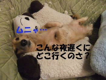 写真697(№212用)1