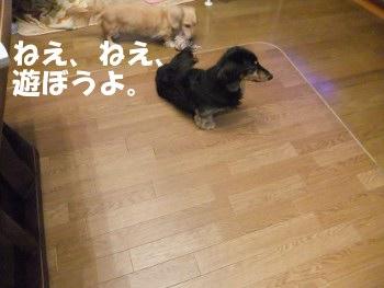 写真724(№214用)1