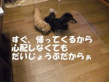 写真725(№214用)1