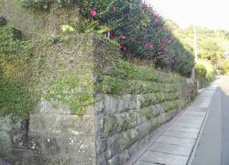 04 椿の咲く石塀 (36%)