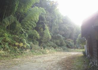 10 竹林 (36%)