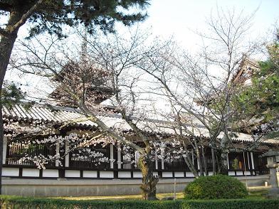 法隆寺の桜・開花状況 2