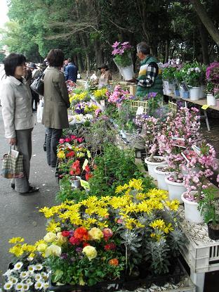 パレード沿道の植木市