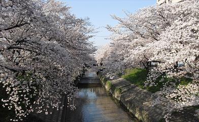 高田川・河岸