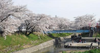 高田川・河岸2